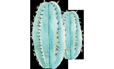 Grafik Kaktus